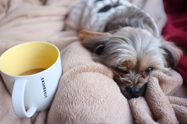 Coffee in bed on a chilly morning! He's not a morning dog!