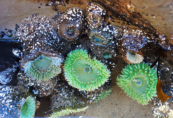 Colorful tide pools!