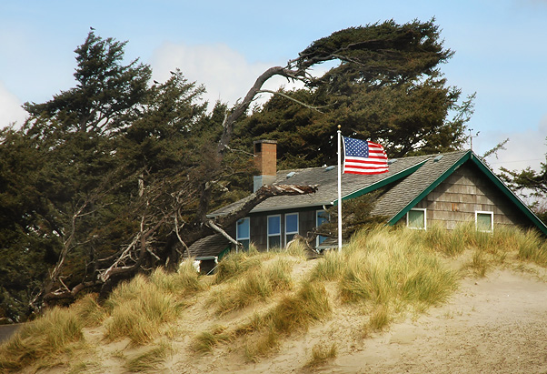 Houses that line Cannon Beach...trees are evidence of the harsh weather!