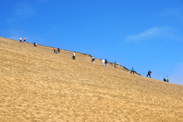 Climbing up the sand dunes with sleds in tow.