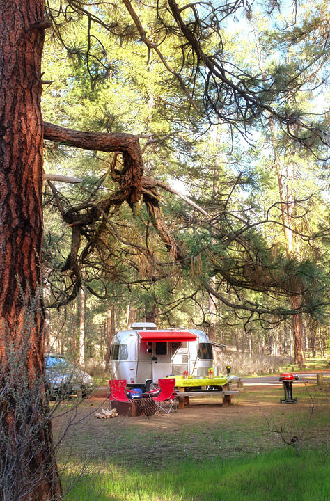 Our campsite framed by the pines