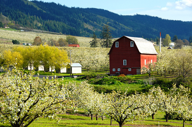 A few blossoms left in the apple orchards.