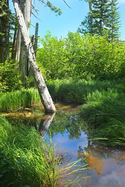 Wetlands...