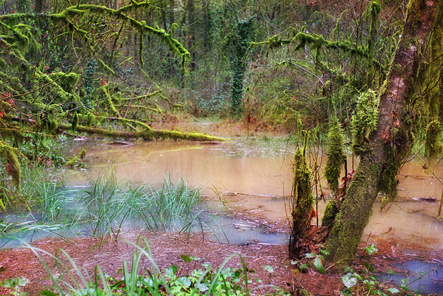 After snow melt and heavy rains…the forest was a swamp!