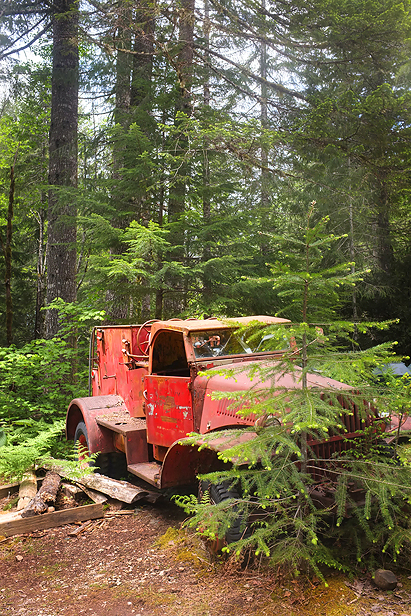 Neat old firetruck hiding in the forest