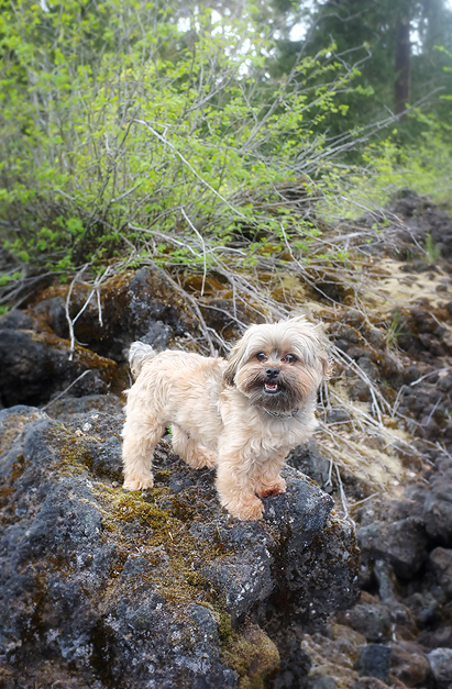 Cooper exploring the lava beds.