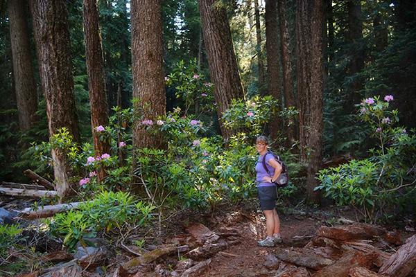 Wild rhodies still in bloom! Our friend Liz met us for the hike.