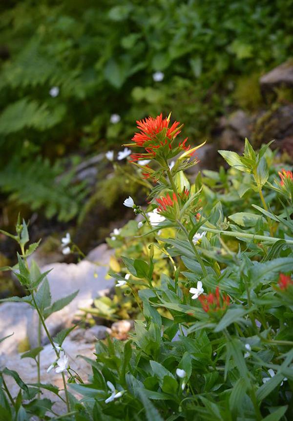 Wildflowers just beginning their bloom.