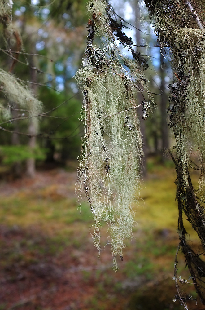 Moss covered limbs…this is a campground where they actually want you to collect wood for fires.
